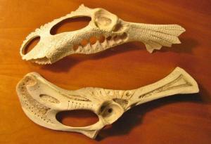 LLG 2 pelvis bones